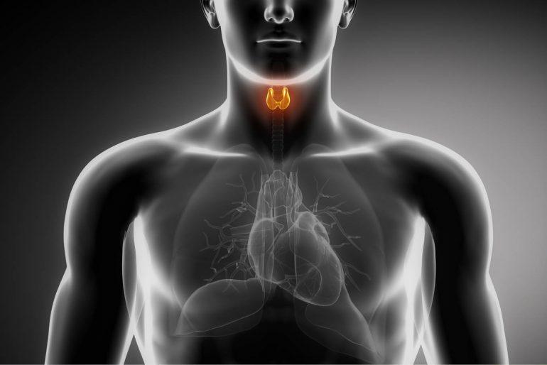 Anatomía de la Glándula Tiroides -