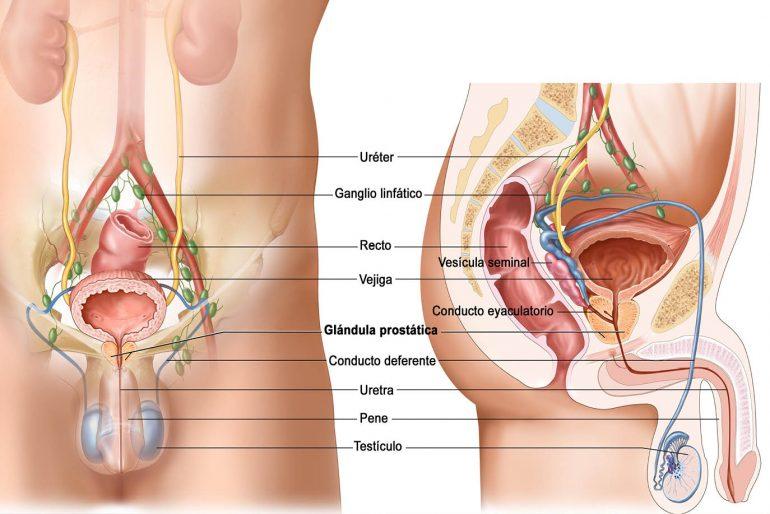 Avances en el diagnóstico ecográfico del cáncer de próstata. -