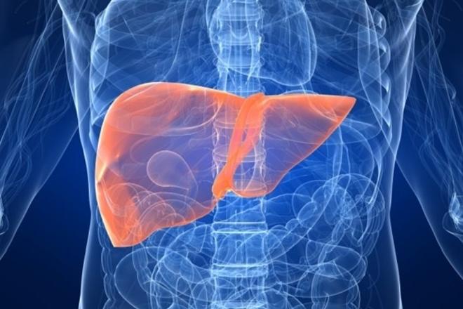 Anatomía del hígado -